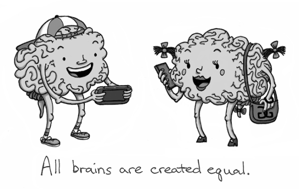 male-female-brain-built